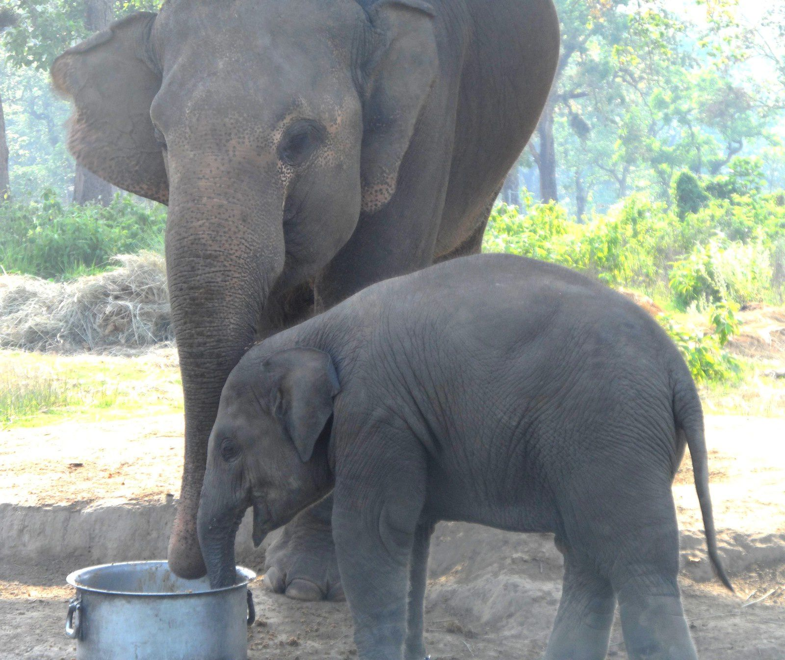 Le complexe de l'éléphant