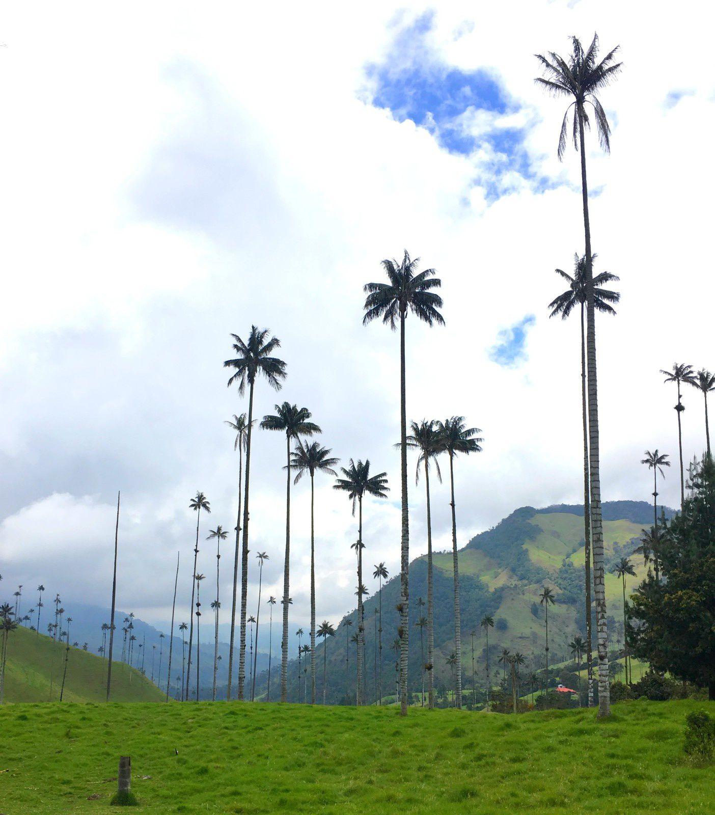 Salento et la vallée de Cocora: le pays du café colombien