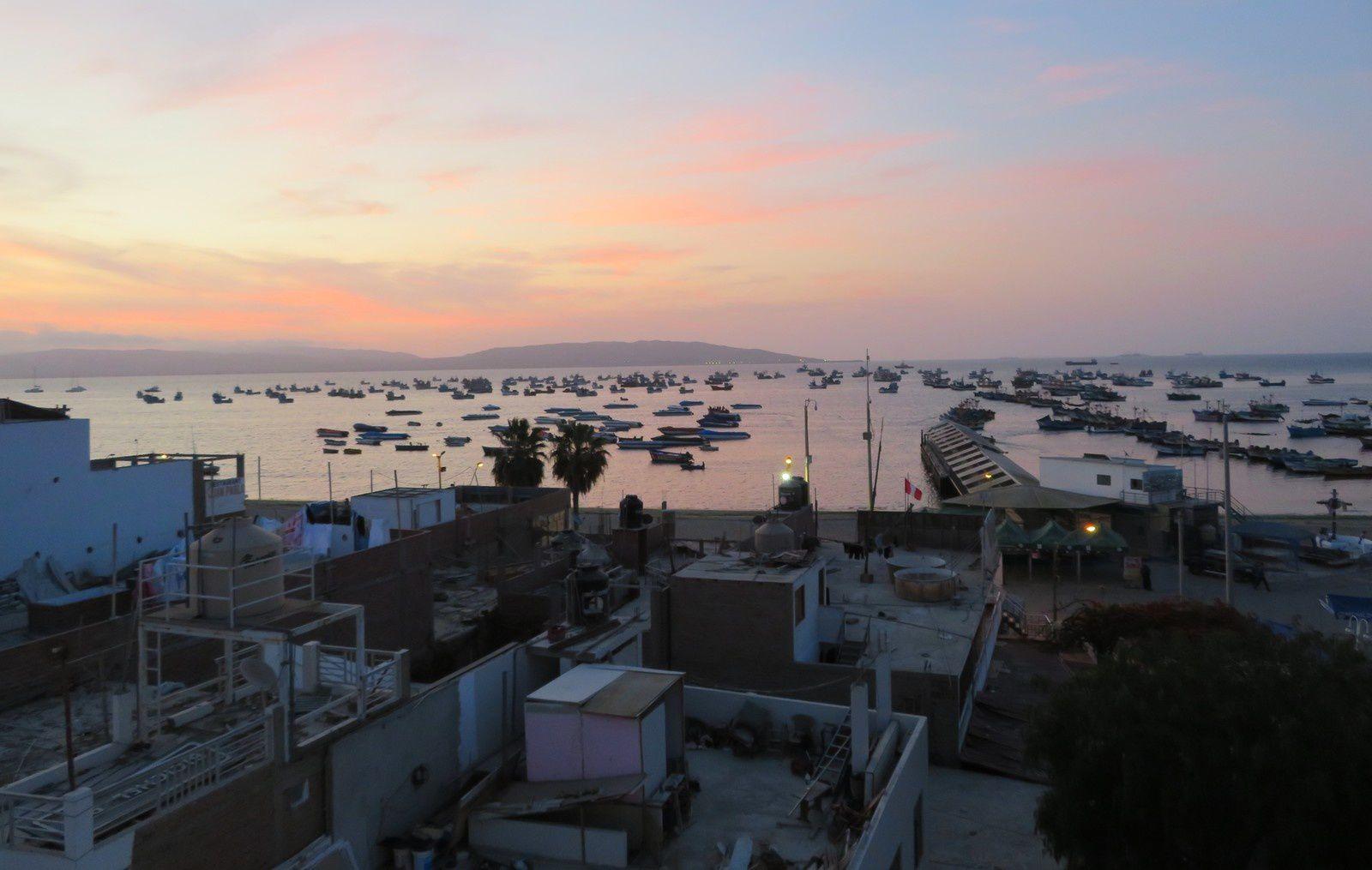 Paracas et les iles Ballestas : manchots et lions de mer