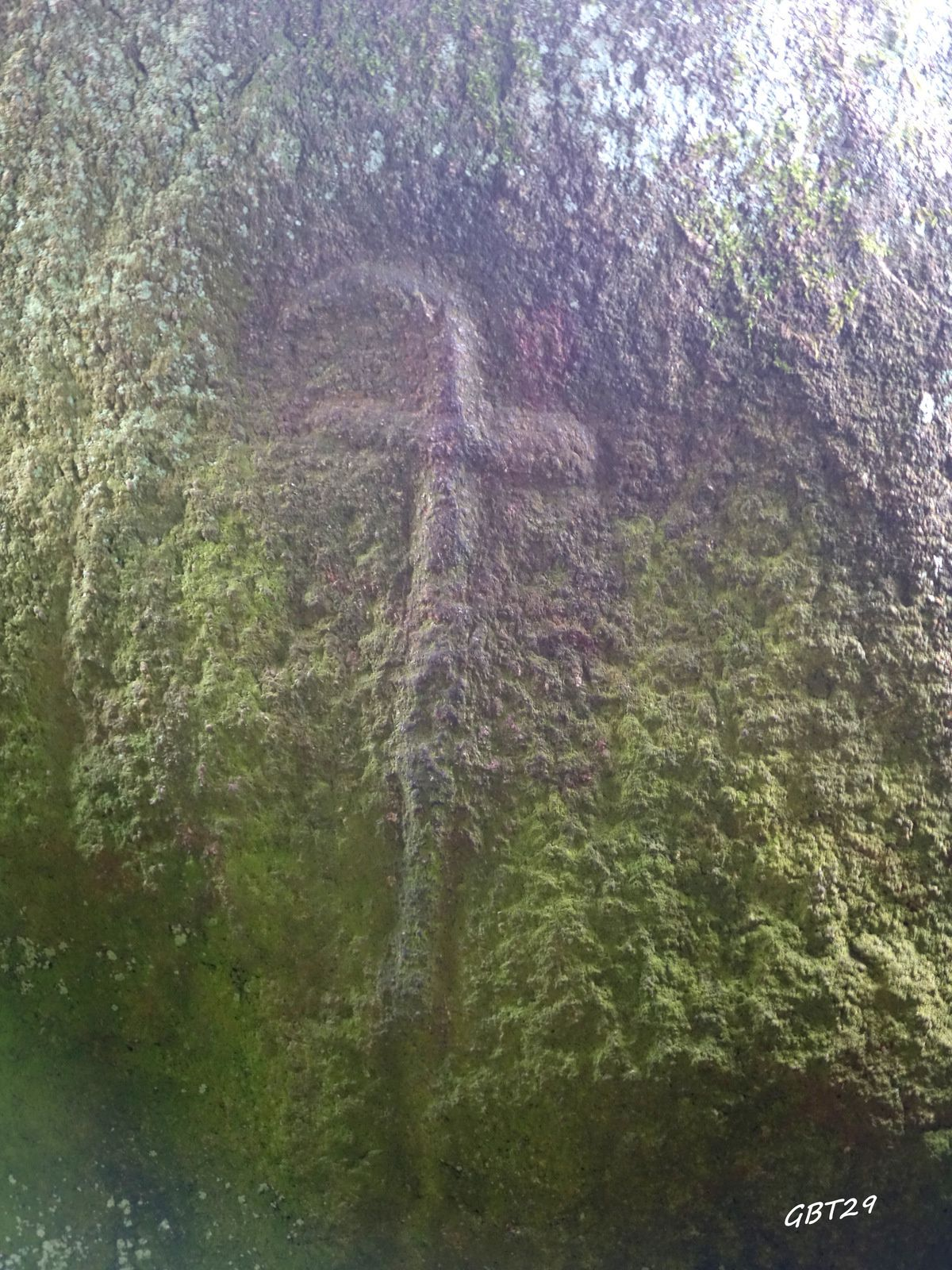 Allée couverte du Mougau-Bihan (Commana)