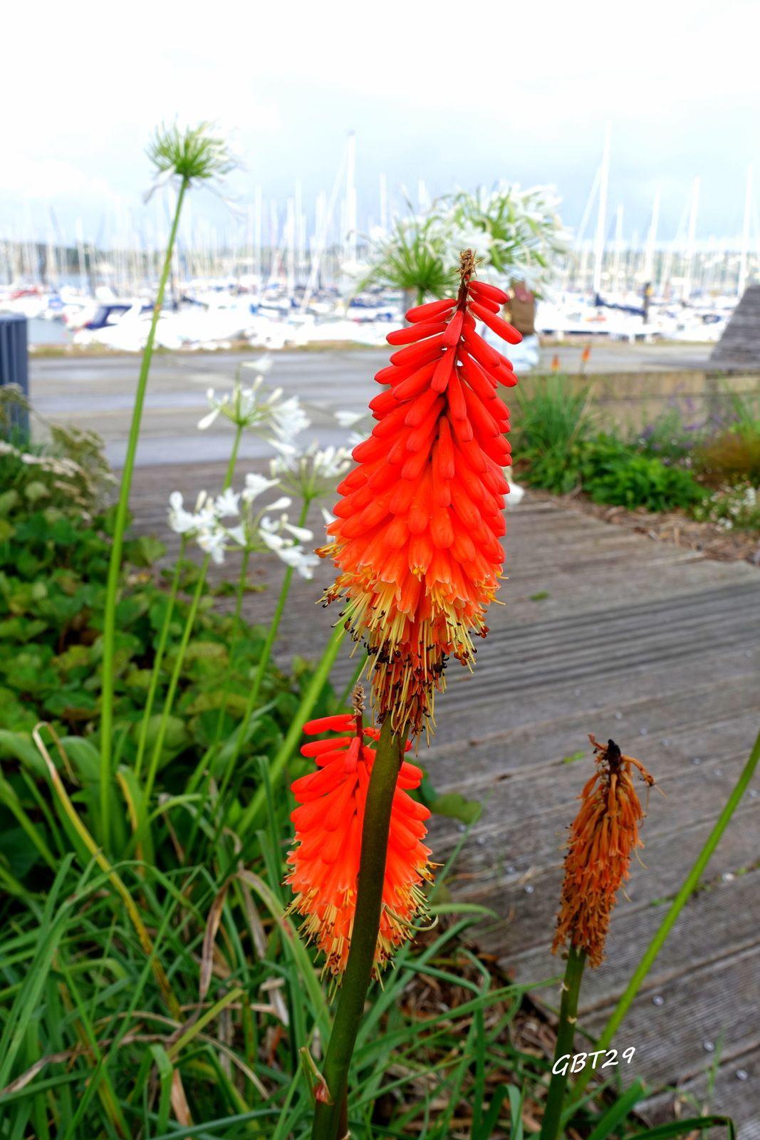 Brest au mois d'août