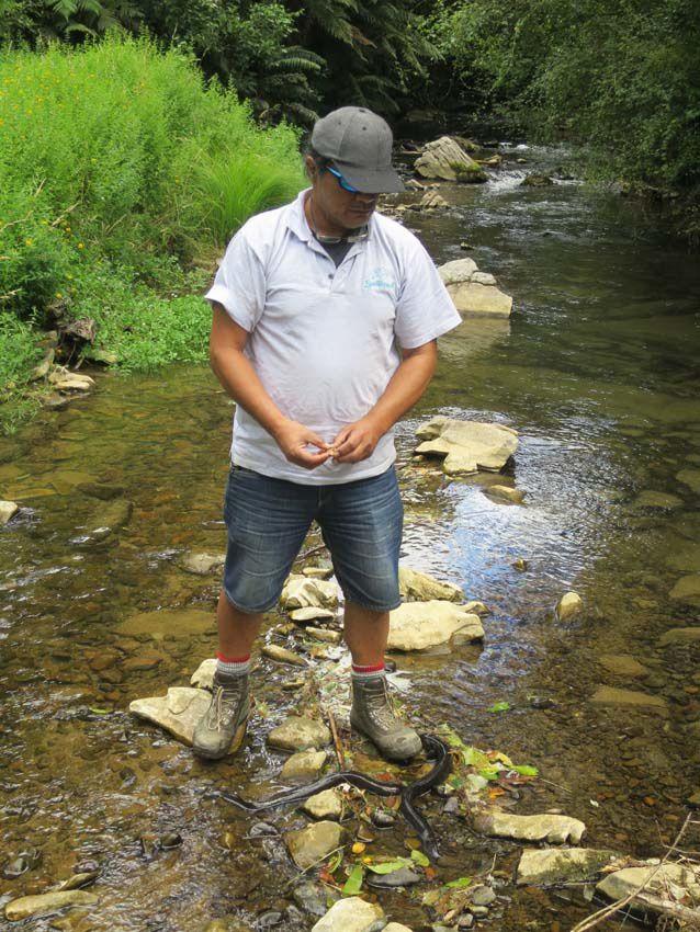 Notre guide Maori et les anguilles. Ph. Delahaye.