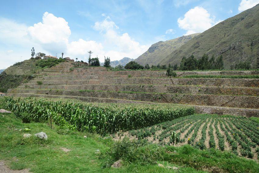 Cultures en terrasses observées ci et là depuis la route. Ph. Delahaye.