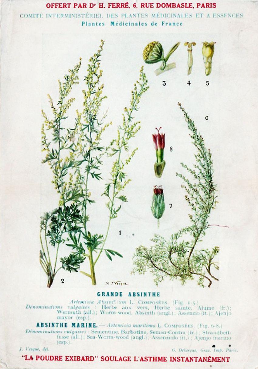 Planche botanique, 1910. Coll. Delahaye.