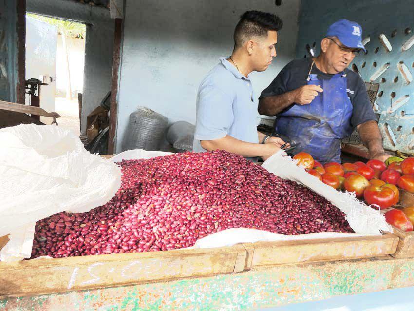 Variétés de haricots rouges. Ph. Delahaye.