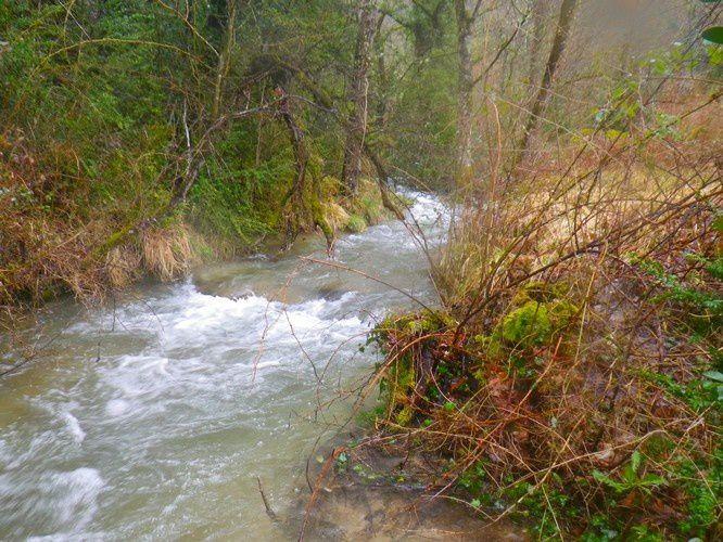 Un ruisseau sous la pluie