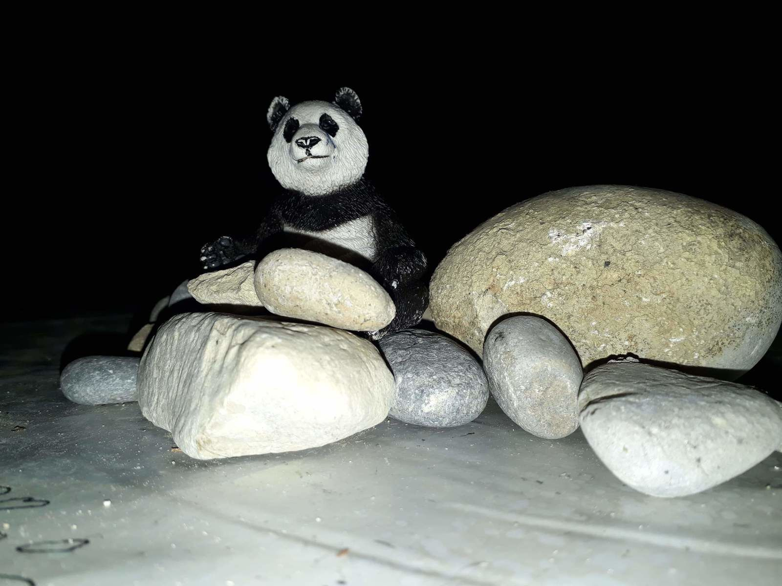Petit Panda de nuit [photographie @elodivague - iPhone photo]