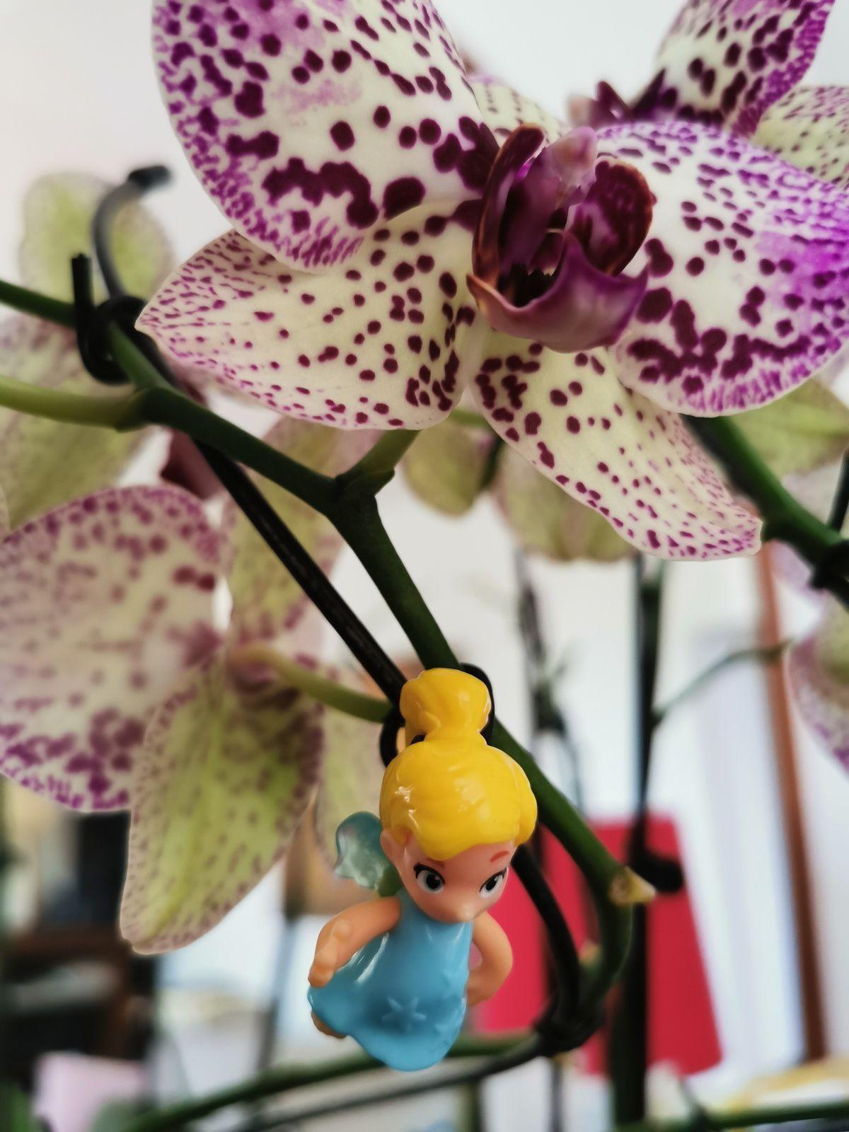 Une fée et une fleur (photographie @elodivague sans filtre ni retouche)