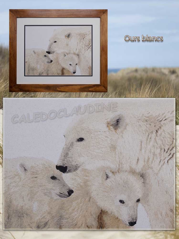 Ours blancs