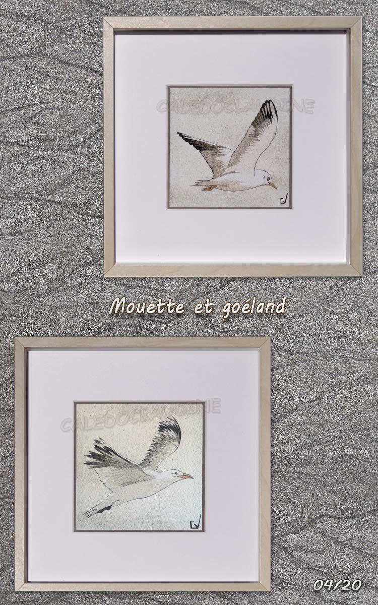 Oiseaux bretons