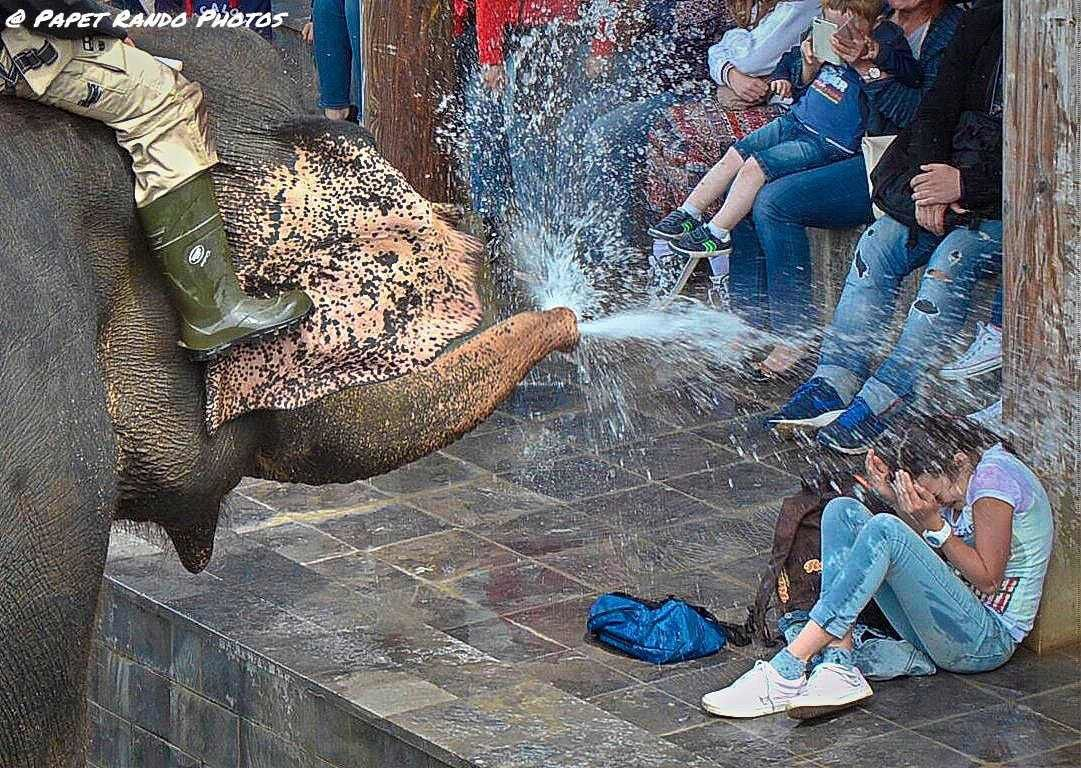 Une journée avec les éléphants,( site remis a jour a chaque visite) avec le bain , & l'arrosage ( a voir tout les jours a 14 H00)