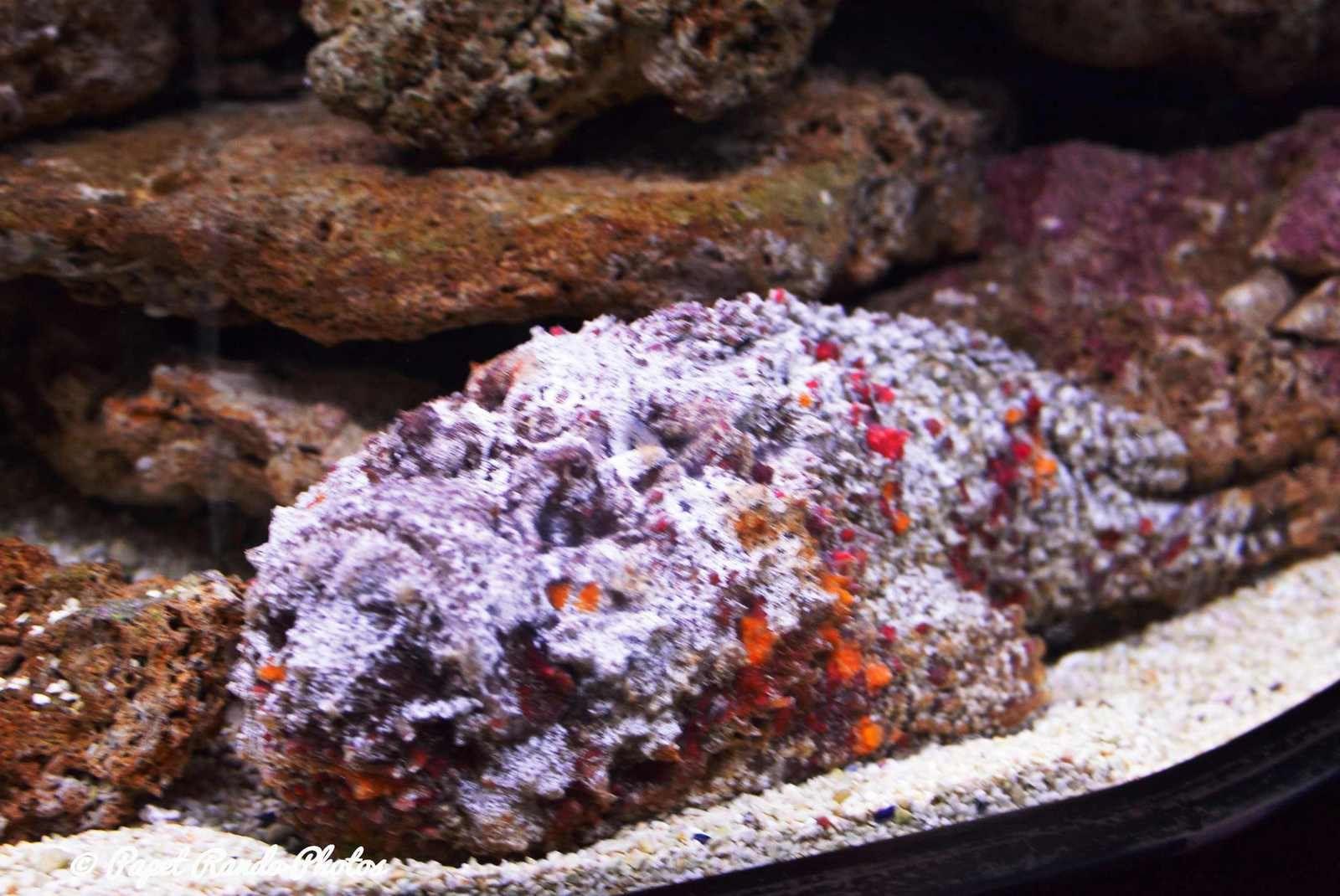 Aquarium Géant sur deux étages ambiance Nautilus    garantie  un vrai régal pour les yeux