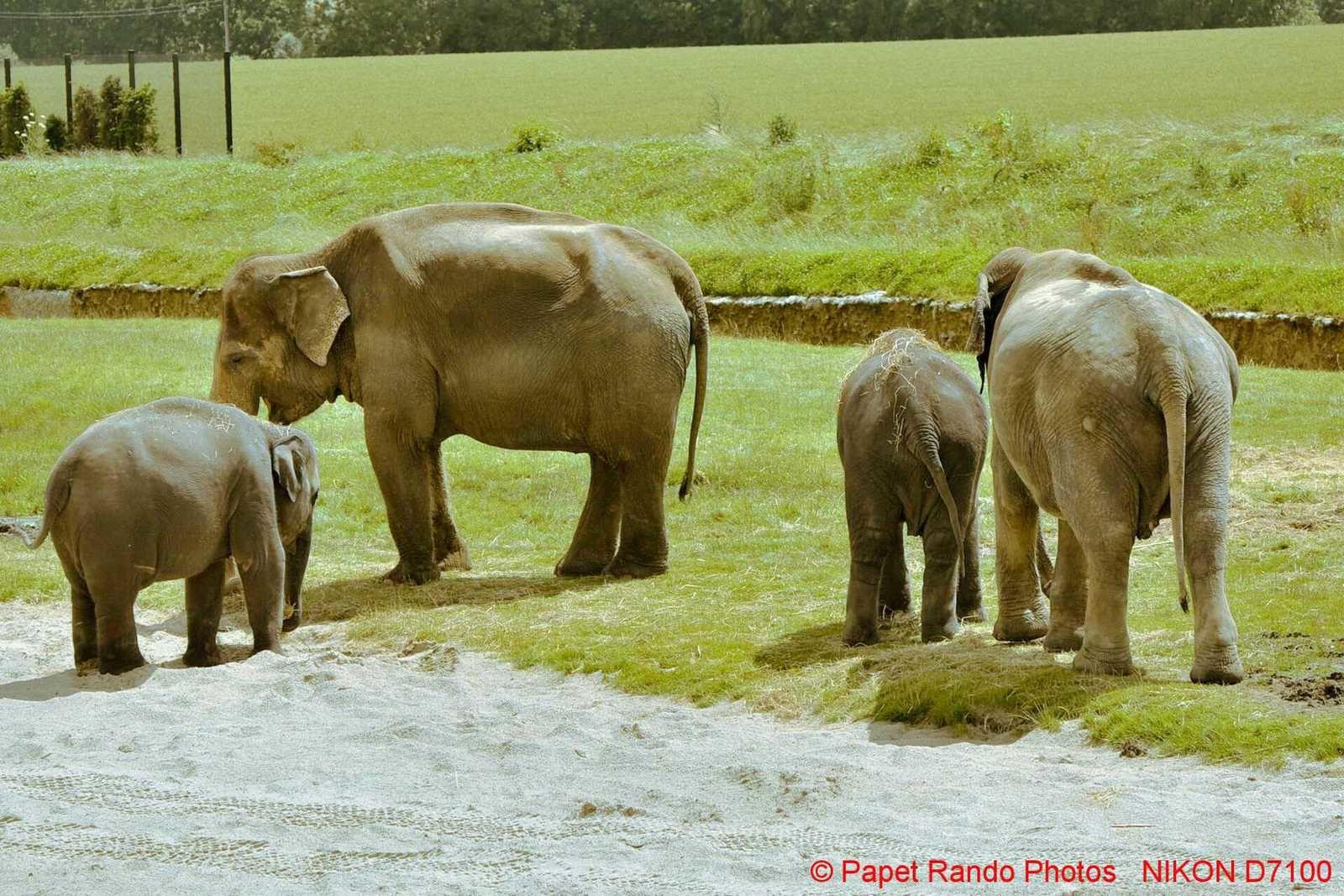 Pairi Daiza un parc extra , une reserve d'Elephants, voici quelques photos sur  4 ans au parc
