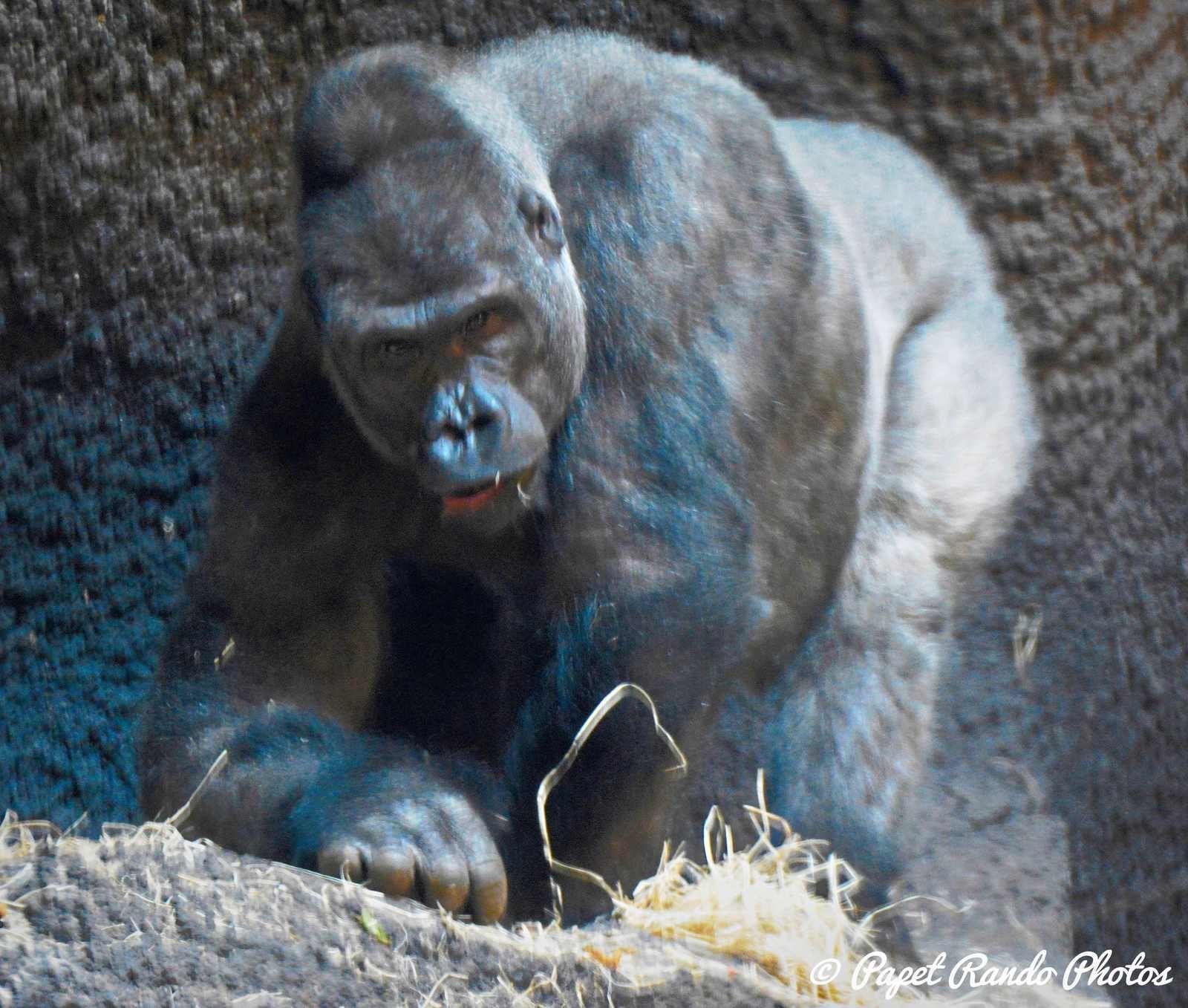 Apres les mignons, oiseaux, elephants, voici les autres plus agressis parait ??!! ( mis a jour a chaque visite)