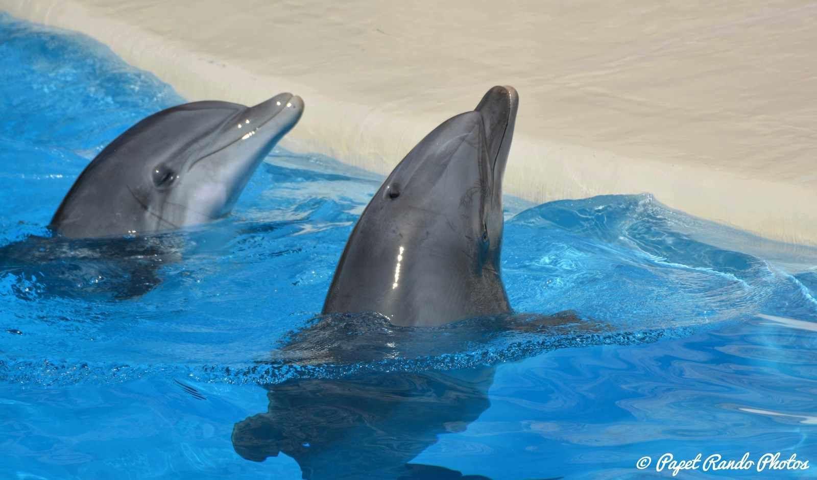 Orques & dauphins en spectacle  Loro Parque