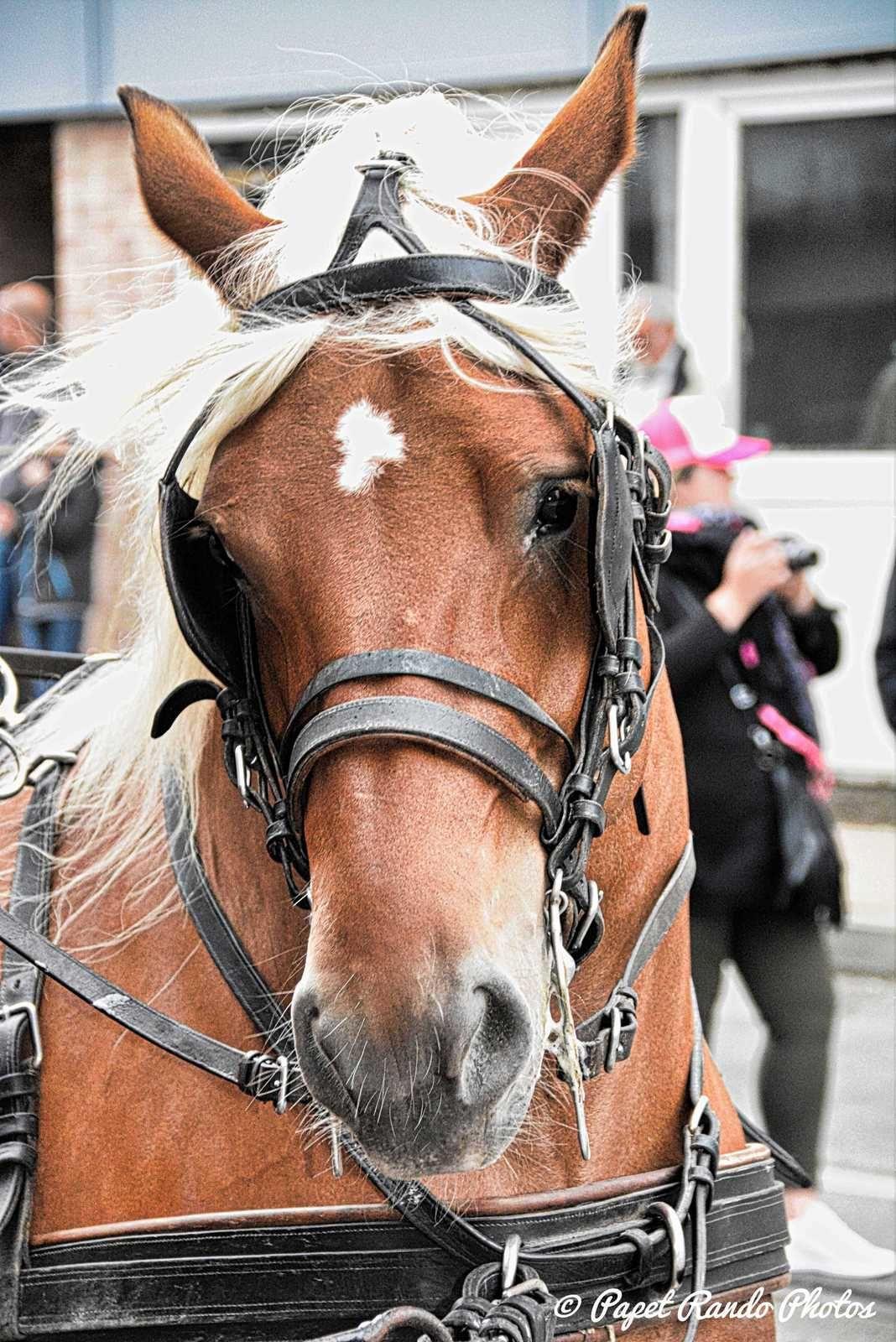 La 637e Marche de la Madeleine  1700 participants, 49 societés, + de 100 chevaux etc quelque chose a voir au moins une fois dans sa vie (photo passage a Gosselies)  Partie N°1 par ordre de passage