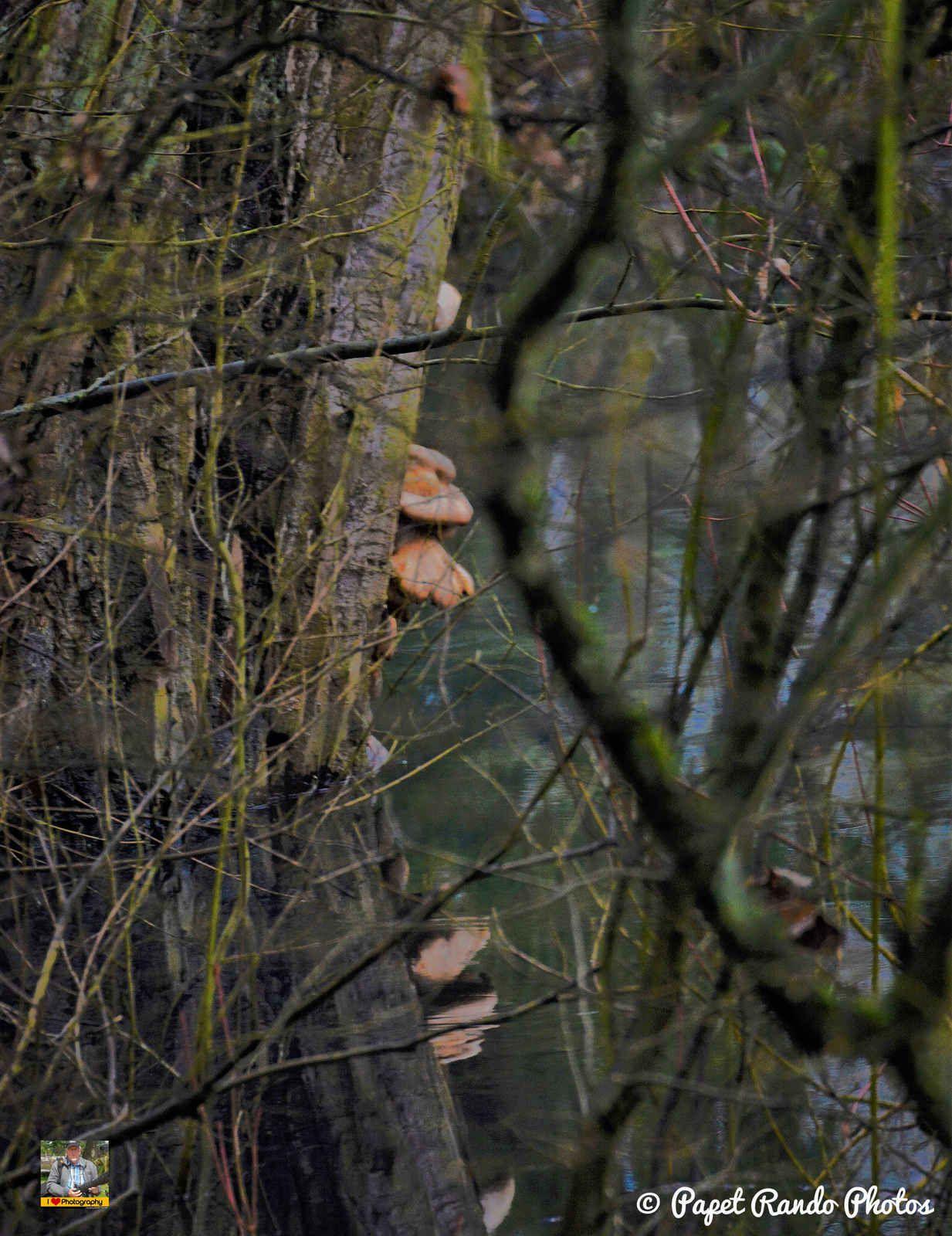 Les Ouettes d'Egypte de retour comme chaque année dans le fond du jardin, ( dans la petite reserve naturelle, avec aussi renards, ecureuils etc, a des endroits l'etang un peu stressant, surtout avec la brune d'une belle journée