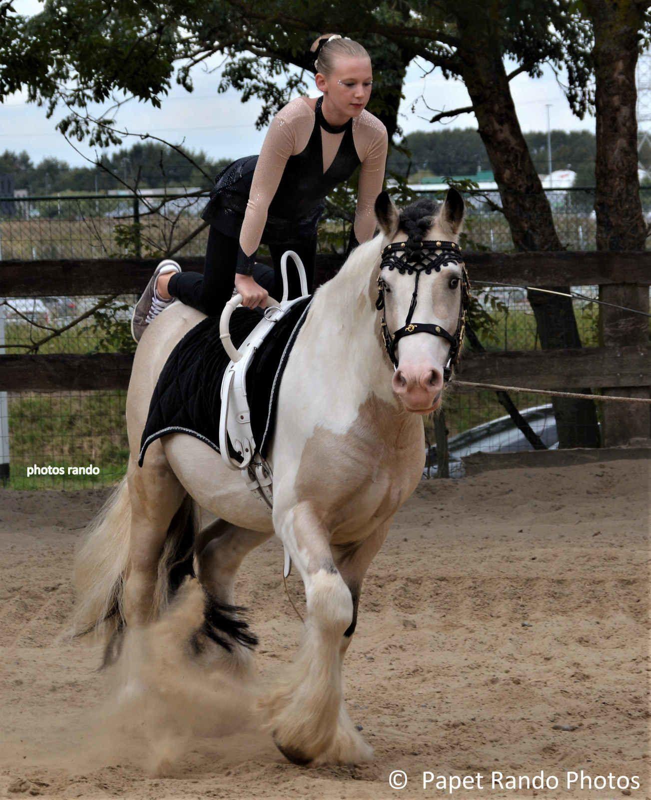 Symphonie Equestre  a Ransart ( ou j'habite) je ne fais plus de photos sur Ransart ( beaucoup savent pourquoi Mr. Tremblez ) mais ici je ne regrette pas d'etre venu ( en