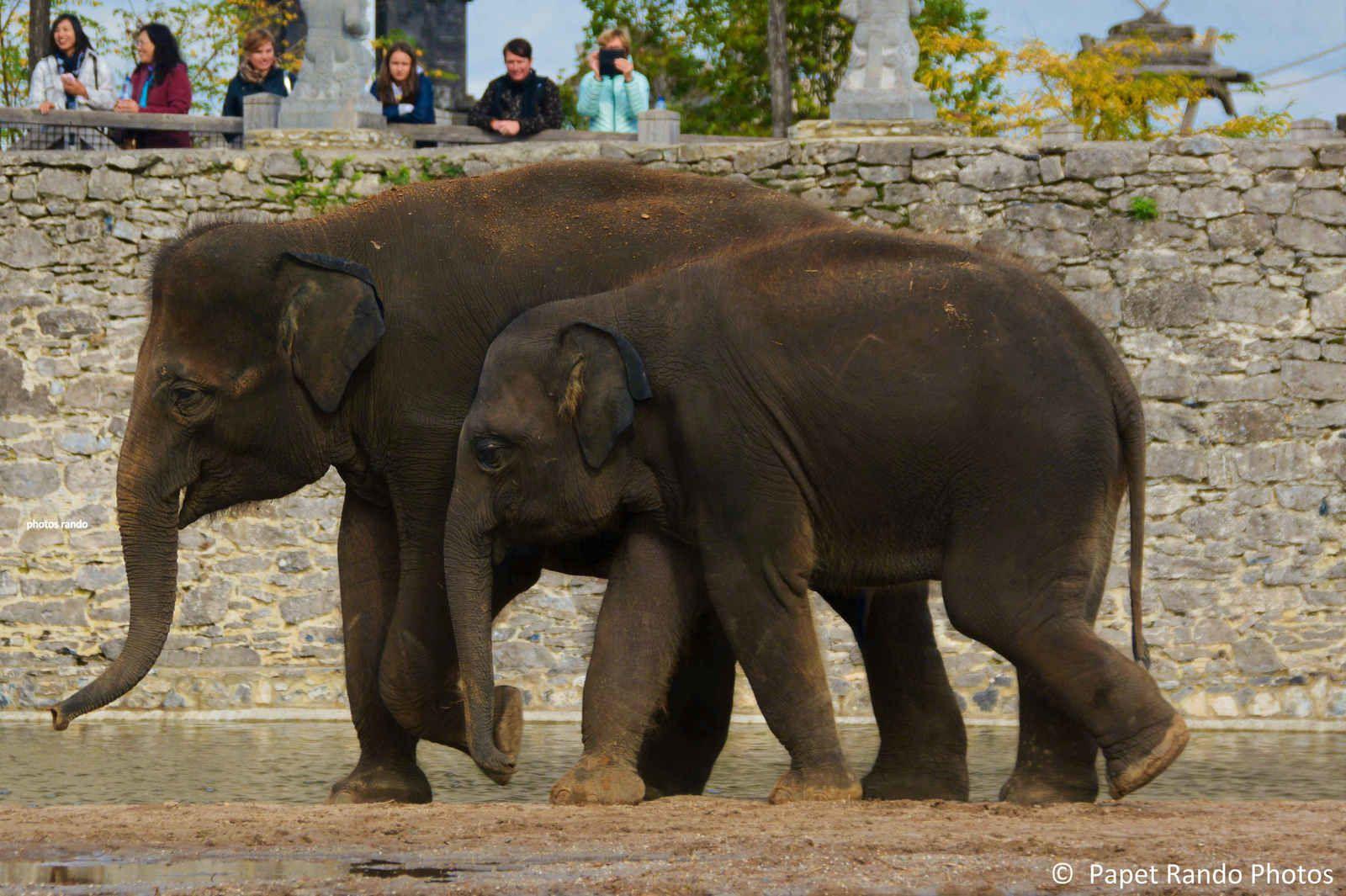 Les  Elephants un peu partout, au bain etc ( photos a chaque viste 2019)