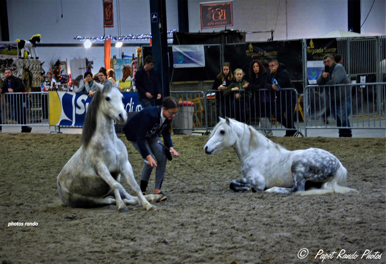Le  Salon du cheval Tournai 2019
