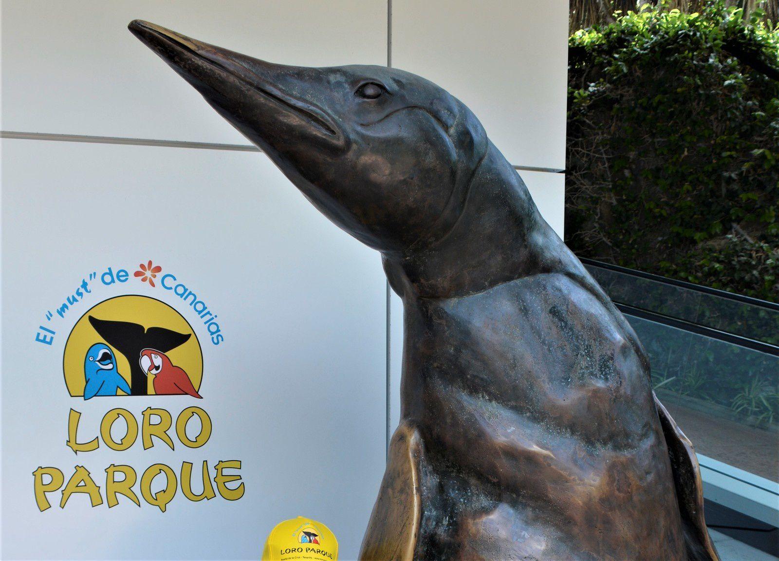 Loro Parque, a Puerto de la Cruz, Tenerife  un parc magnifique a voir ( ici les plus belles photos pour moi°