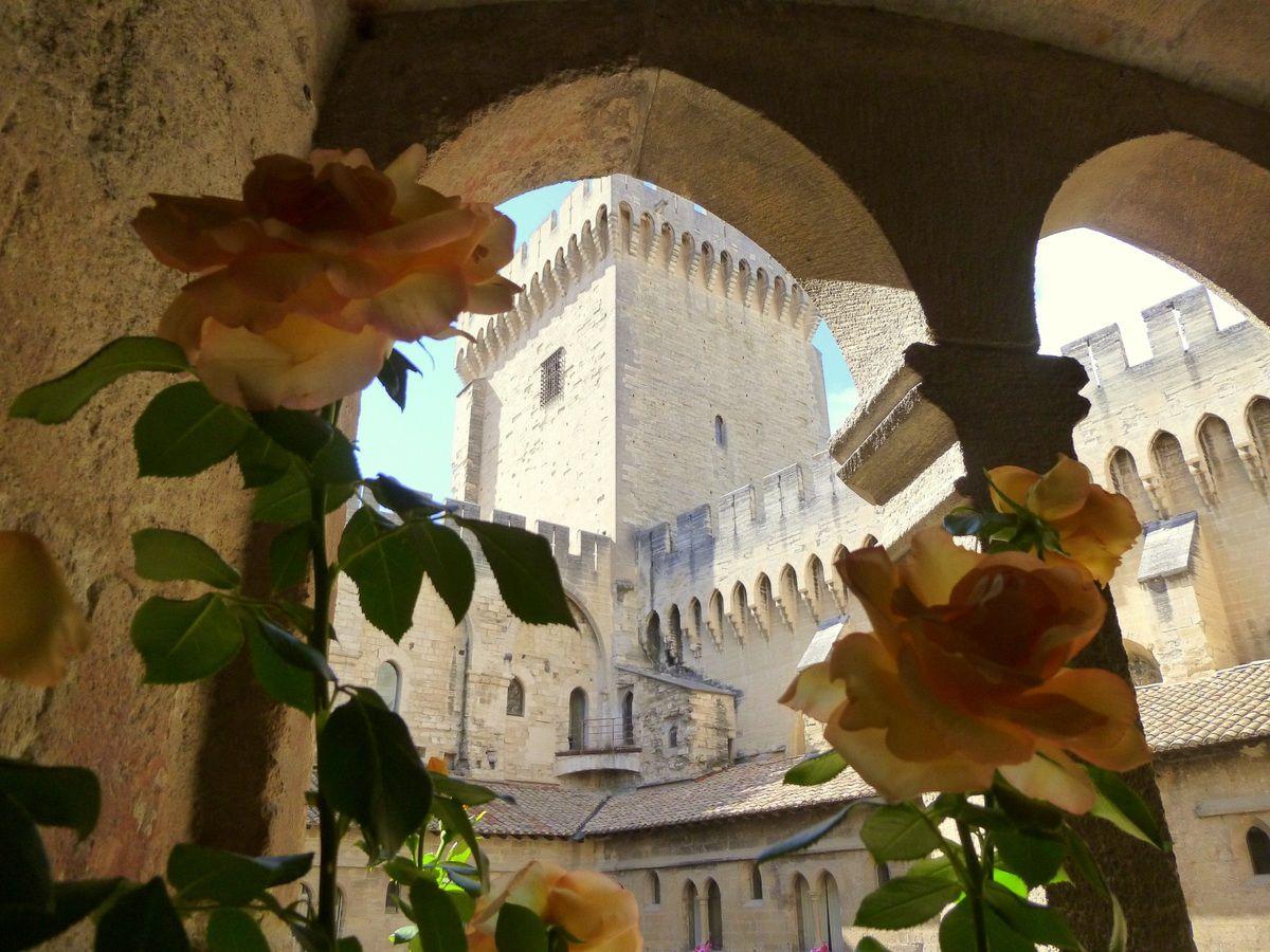 Quelques instantanés de l'exposition de rosiers dans le cloître du Palais des Papes (juin 2014, images personnelles)