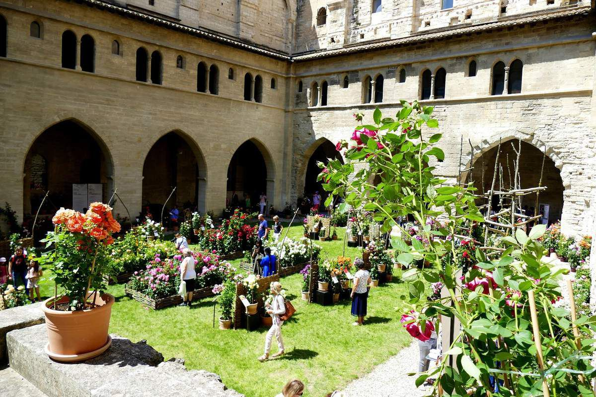Altera Rosa 2018, les roses s'exposent en Avignon