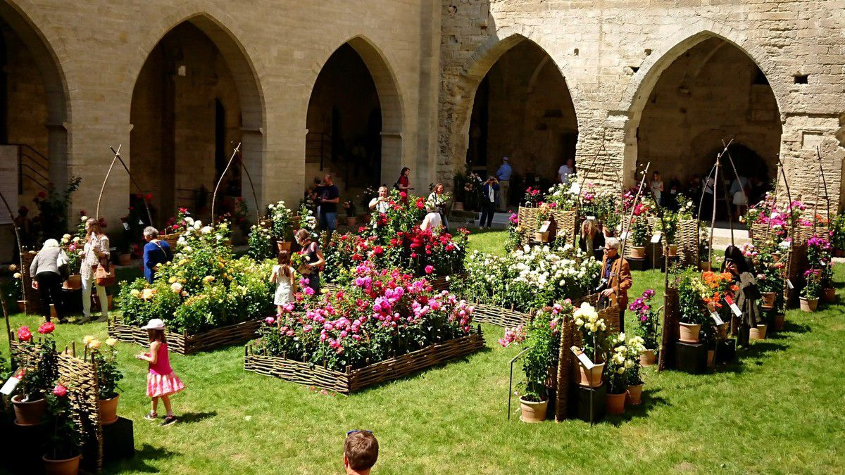 Le cloître du Palais des Papes accueille visiteurs et rosiéristes (mai 2018, images personnelles)