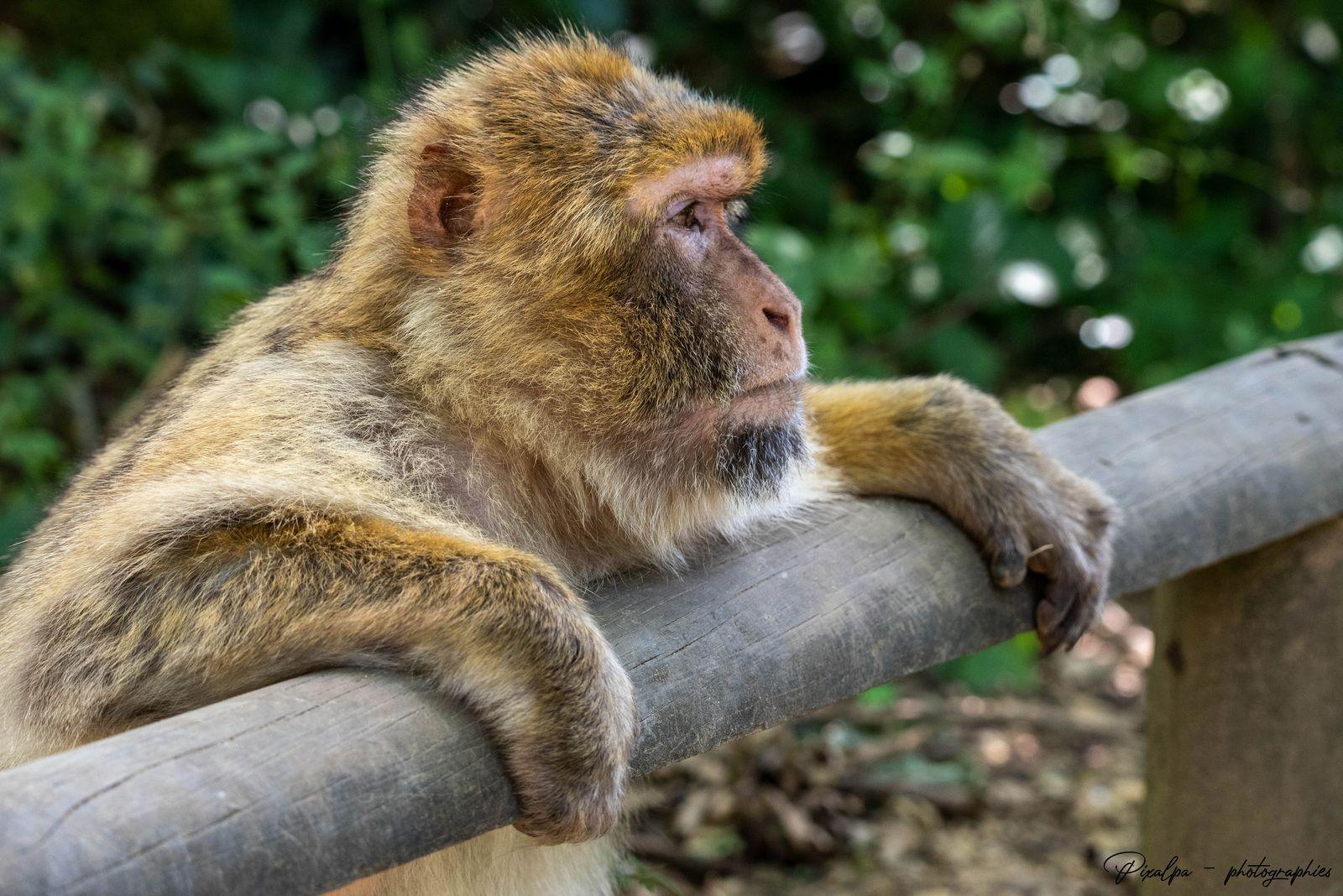 La Vallée des singes à Romagne (86)