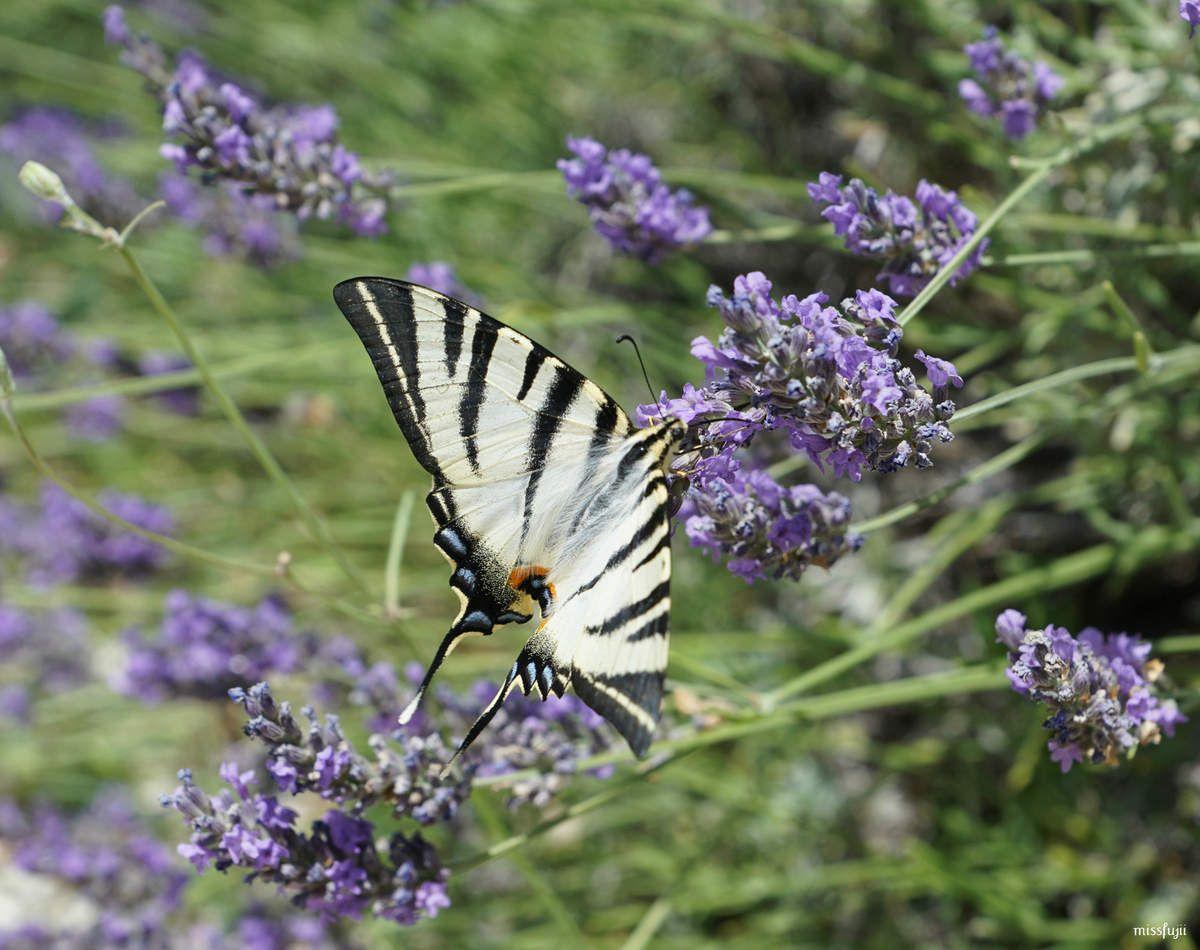 La photo du dimanche #46 papillon