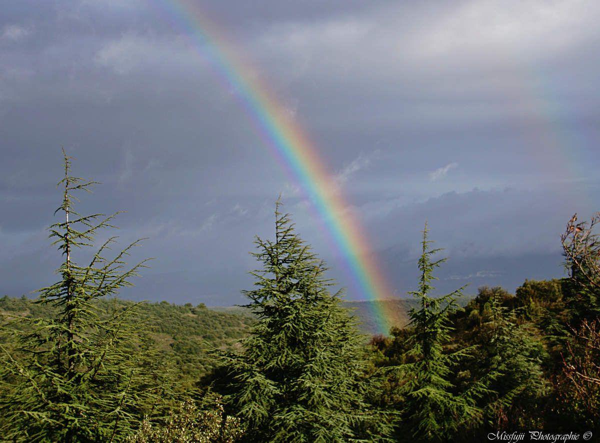 Sur cette photo, ce ne sont pas vraiment des sapins que l'on peut admirer, mais tout de même des confères à aiguilles. J'ai pris cette photo dimanche dernier dans le Luberon du côté de la forêt de cèdre. Comme j'ai randonné sous la pluie et le soleil, j'ai eu droit à un double arc en ciel. (le second est moins visible, mais, en regardant bien, on peut le distinguer).