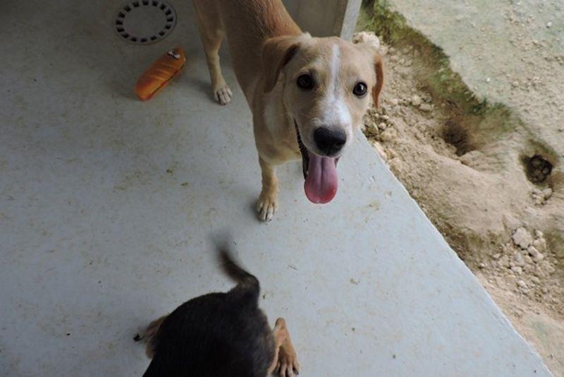 MOONLIGHT ADOPTEE au refuge d'Orgeval - femelle croisée labrador - née le 15 septembre 2016
