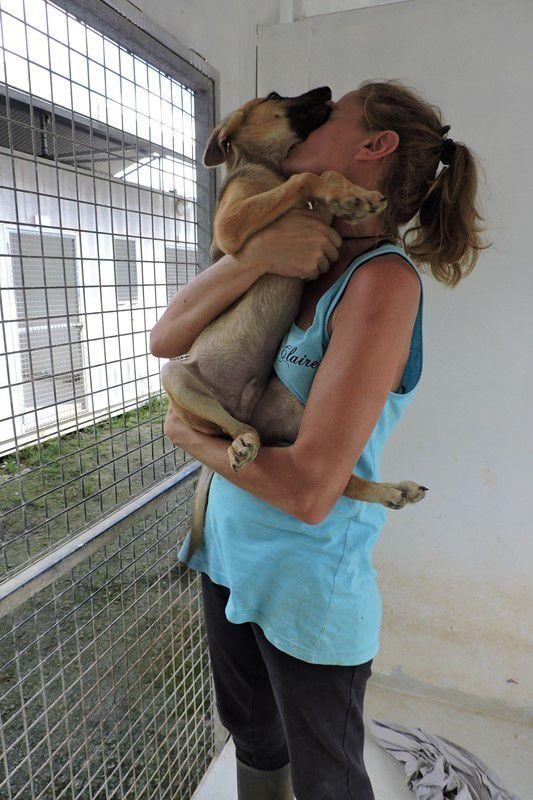 SYLVESTRE s'appelle NOA  - chiot croisé berger - vacciné -  adopté à 4 mois
