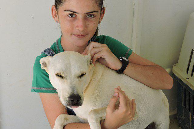 TYLICO s'appelle TAINO - chien mâle croisé Kishu-chien de canaan - né le 14 juillet 2015 - adopté