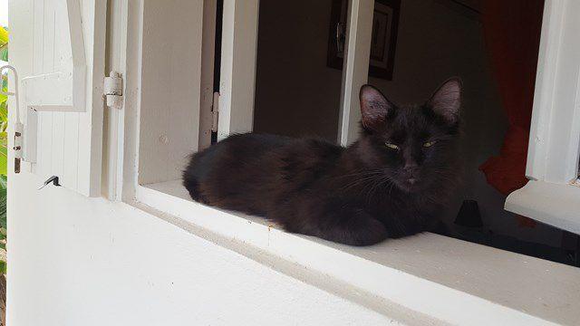 MOHAIR s'appelle  PABLO - chaton croisé main coon - adopté à 2 mois