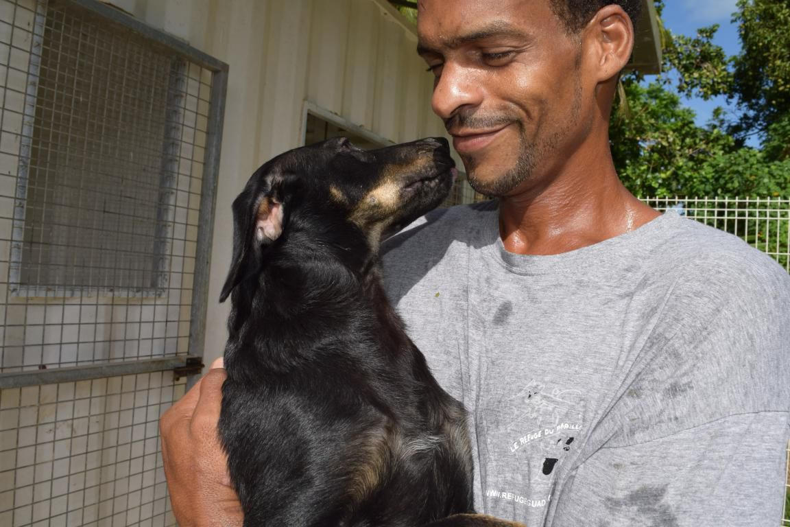HUTCH s'appelle Kaïo - mâle croisé noir et feu - né le 17 décembre 2016 - Adopté