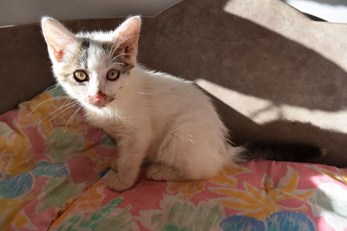 BAILEY'S - chaton femelle - née le 06/04/2017 - adopté