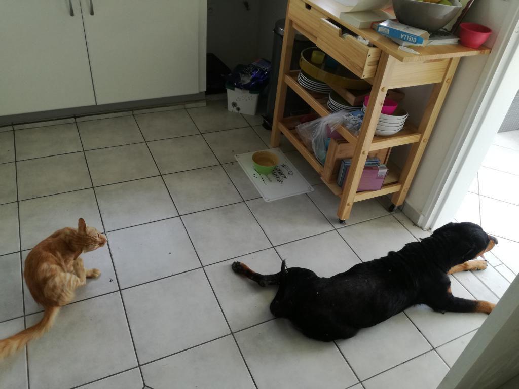 MAMYCHOU - 8 ans - au paradis des chiens