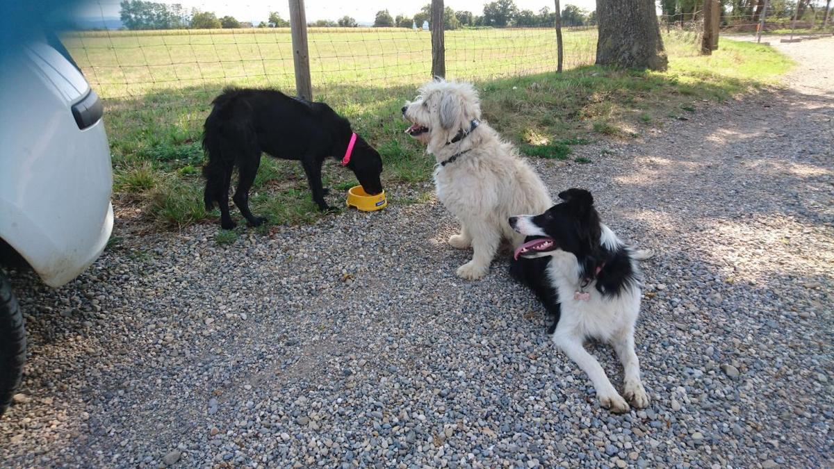 Encore une belle histoire, le sauvetage d'une chienne abandonnée - NAHE - adoptée