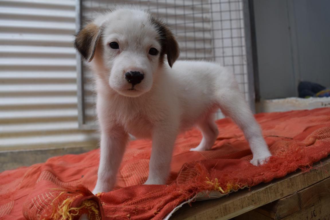 LUNA s'appelle NOVA - 2 mois et demi - adoptée