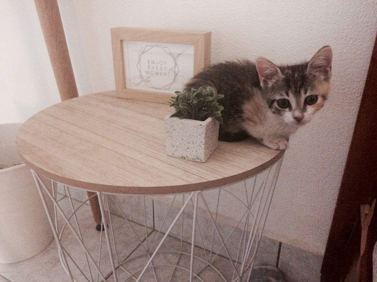 ELFY - chiot récupéré le 13 septembre au pied des poubelles - adoptée