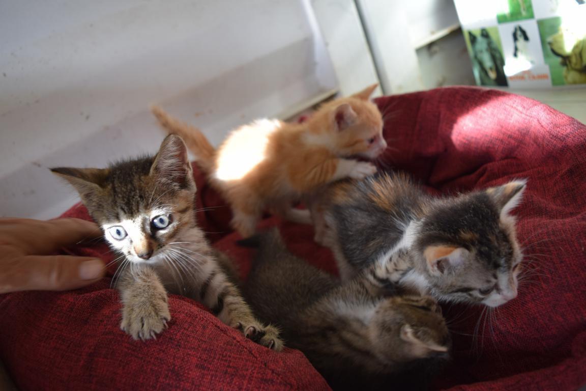 je me souviendrai toujours de ce 13 septembre où je l'ai trouvé avec 3 autres chatons au pied des poubelles de nolivier je n'avais pas cage chats dans la voiture, ça a été sportif de les ramener au refuge !
