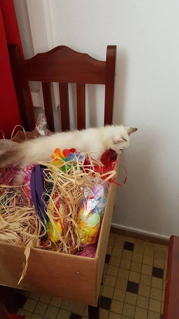 MARQUISE - chaton femelle - née le 17/09/2017 - adoptée