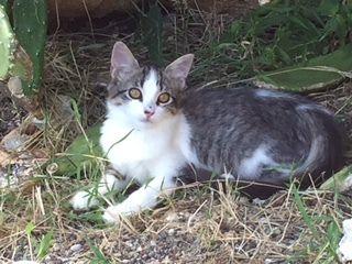 MEERA s'appelle NOUKA - née le 17/09/2017 - adoptée