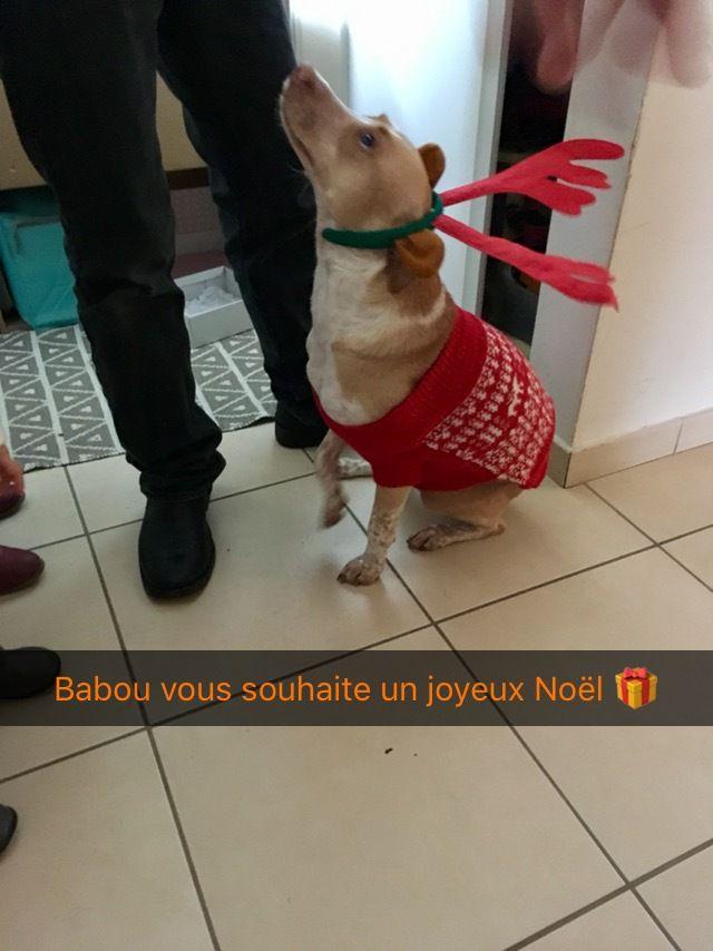BAMBOU s'appelle BABOU - femelle créole - née le 1 mars 2016 - adoptée pendant l'évacuation cyclonique