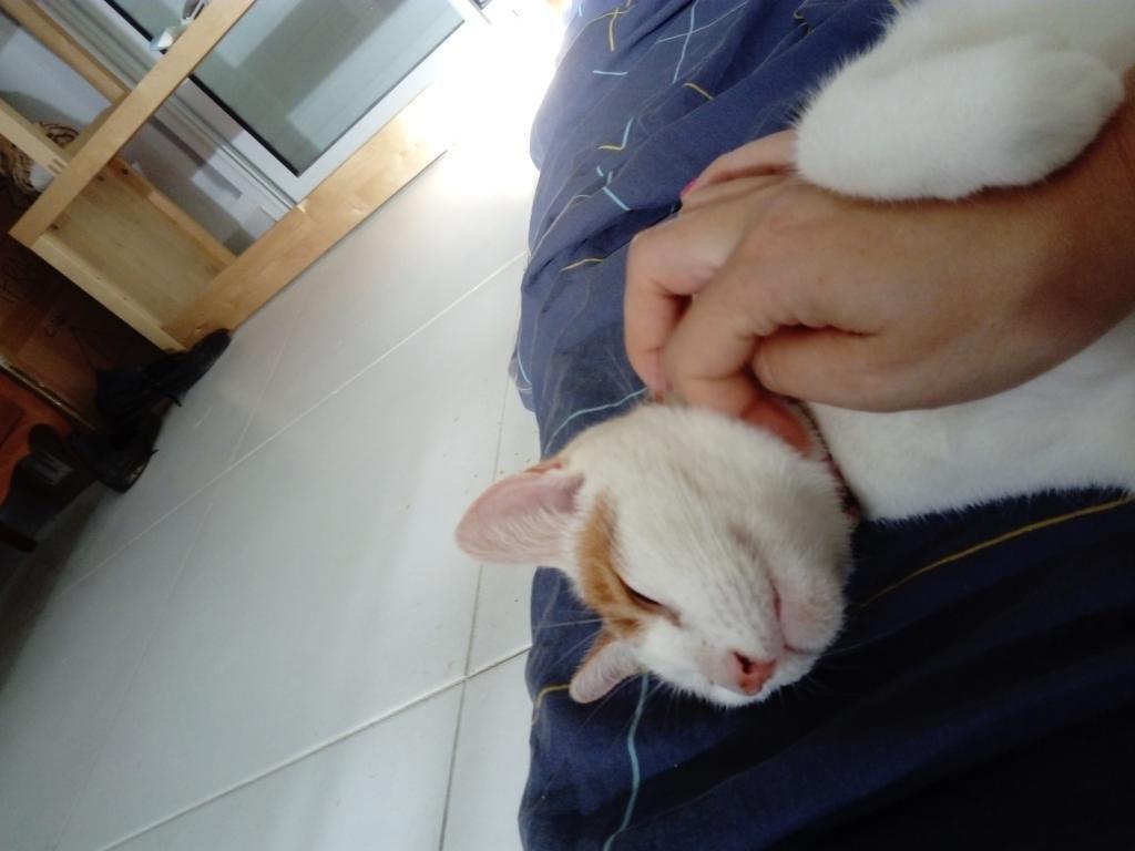KAWAY - femelle - née le 25/07/2016 - adoptée