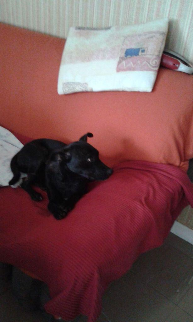 1er jour dans le panier, 2ème jour sur le canapé : Sweetie a tout compris déjà ! la belle vie c'est pour elle !