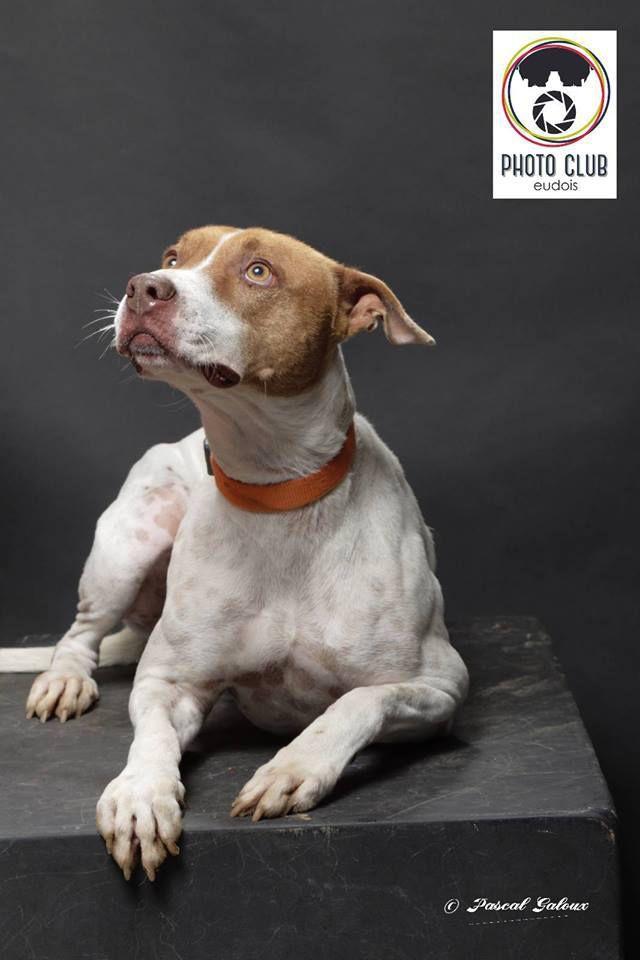 KINDER - magnifique sauvetage, magnifique chien - né le 08/07/2015 - transféré au refuge SPA d'Etalondes