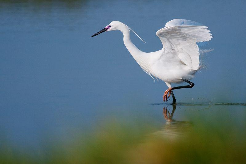 Dans la baie de Somme, royaume de la lumière et des oiseaux. In Interligne.overblog.com