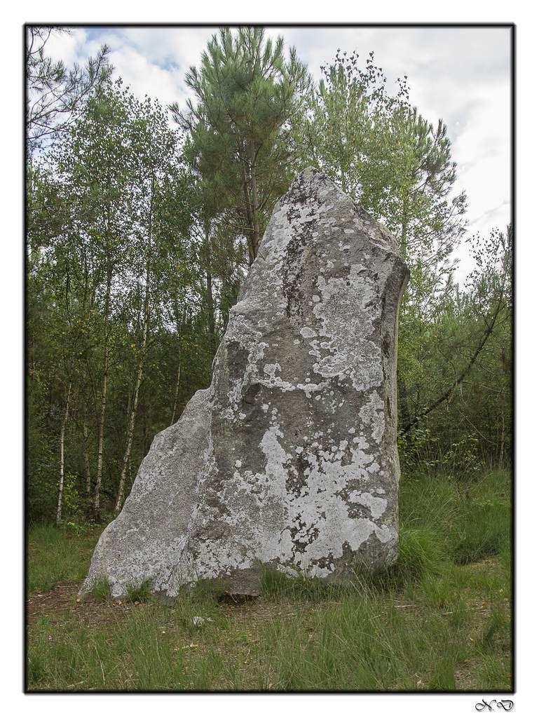 Saint-Jean-de-la-Motte - Menhirs, la mère et la fille - GPS 47.783488, 0.090053